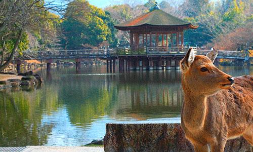奈良の情報