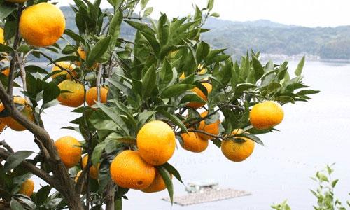 愛媛県の情報